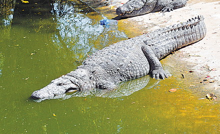 Another death in zoo — this time it's a crocodile